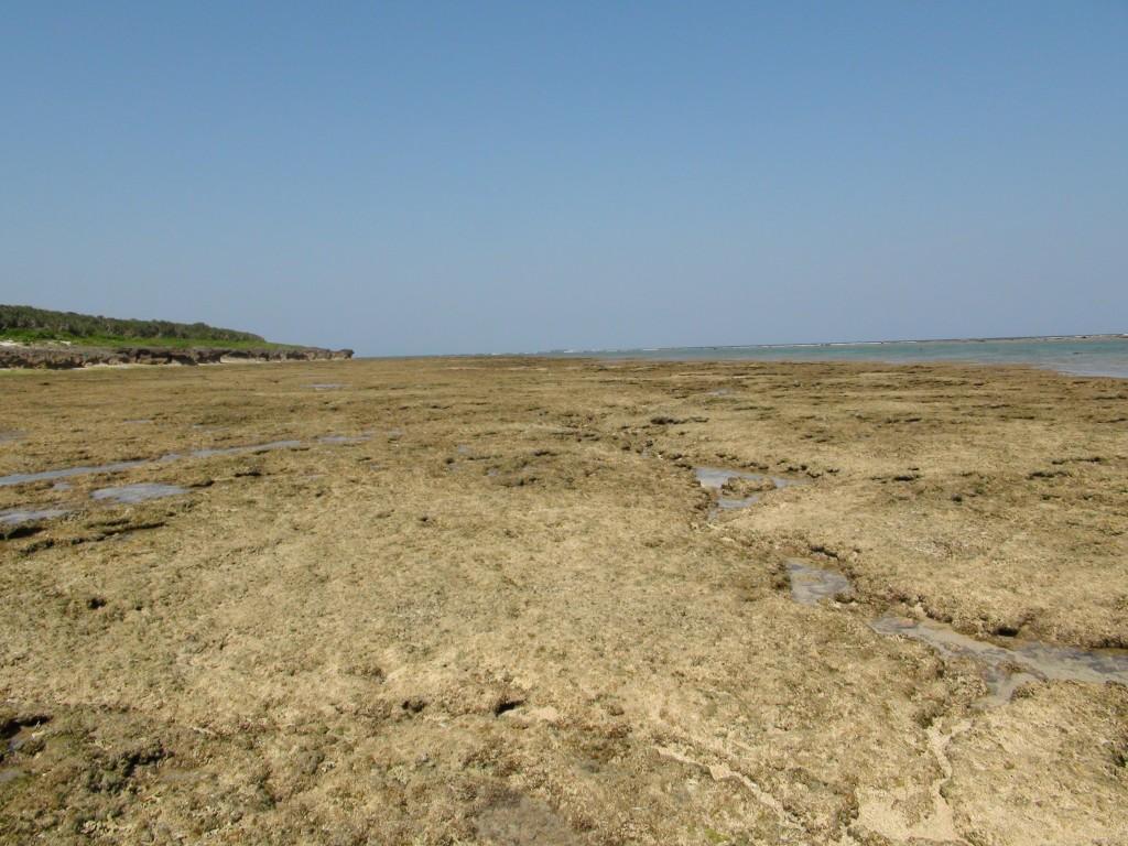 L'Ile de Kudaka dans images dsc003351