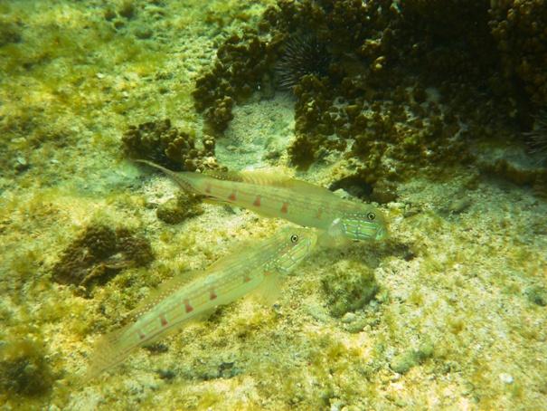 poissons22